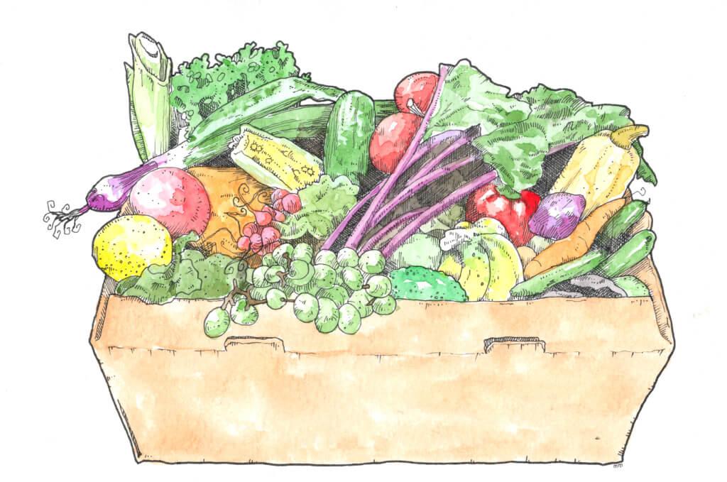 food-and-veg-box